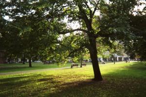 New Haven Green Circa 2005